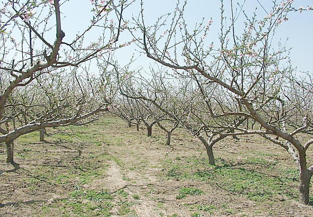 陕西有机肥厂家讲解果树种植要点
